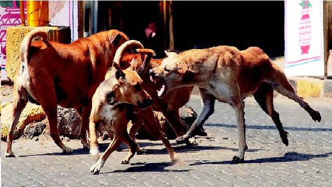 50 stray dogs attacked and killed 65yr old woman in Kerala – News24hours