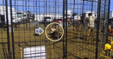 circus-tiger-drags-trainer-news24hours-in