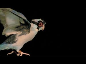 bird-goggles-news24hurs-in